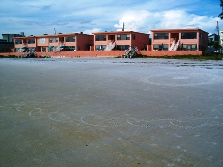 Siesta Key Florida Vacation Beachfront Rental Condos