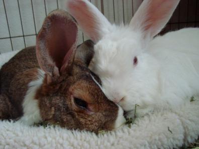 Disabled Rabbits