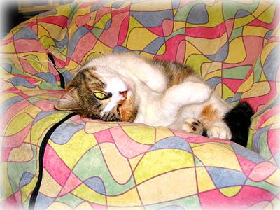Cat in Microfiber Beanbag