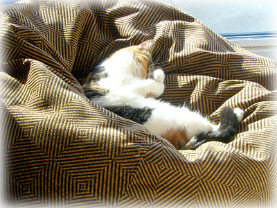 Cat in Tapestry Beanbag Chair