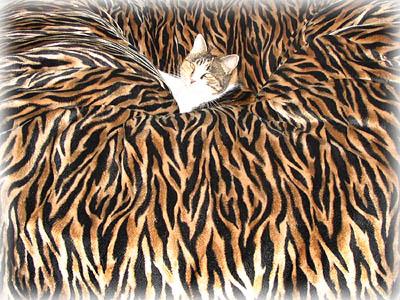 Cat in Tiger print Velboa bean bag