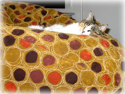 Cat in Polka Dot Beanbag Chair