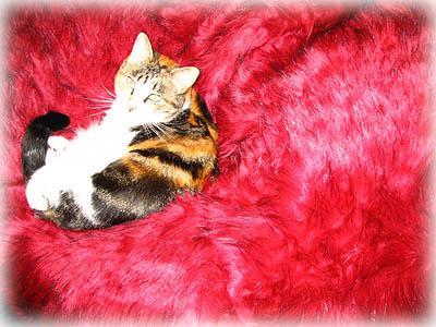 Cat on Faux Fur Bean Bag