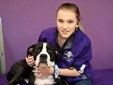 Sydney - Dog Care Attendant - Since 2018